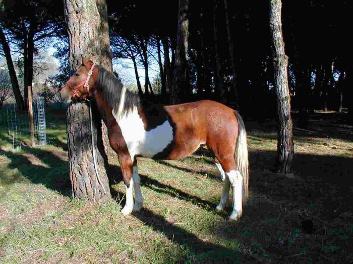 Моя лошадь Пиа