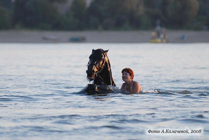 конь ушел под воду с головой. Вынырнул, сильно прижав уши к голове, наверно, вода попала...