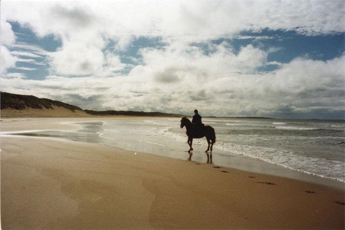 Ireland. Sligo. Irish Sport Horse.