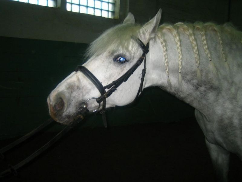 голубоглазый конь :)