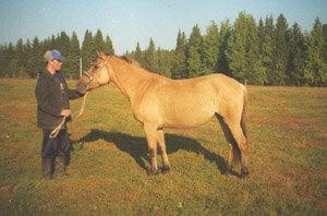 Коб. Забава (Воробей - Зура) 1993 г.р. (съемка в колхозе Колос в сентябре 1997 г.);
