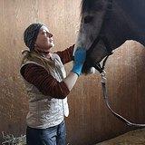 Подпиливание и балансировка зубов лошадей и пони
