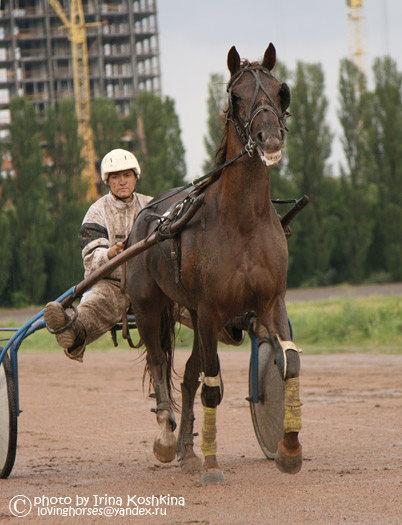Во время забега пощел ливень. Почти все наездники и лошади были забрызганы грязью.