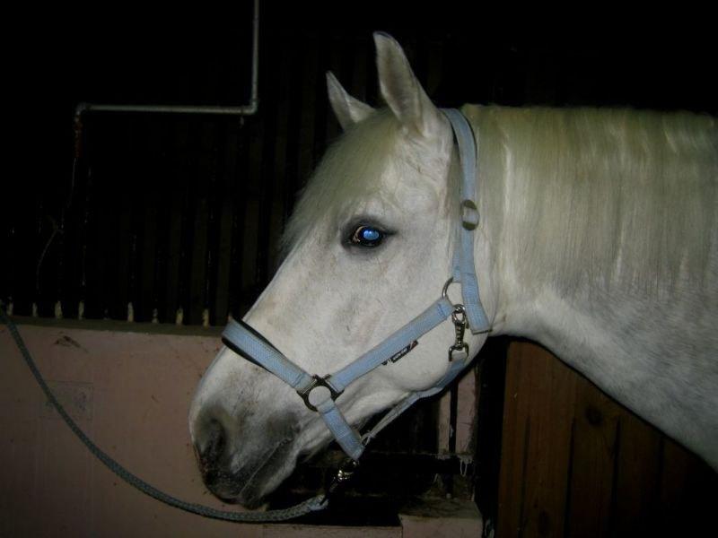 Моя голубоглазая лошадь