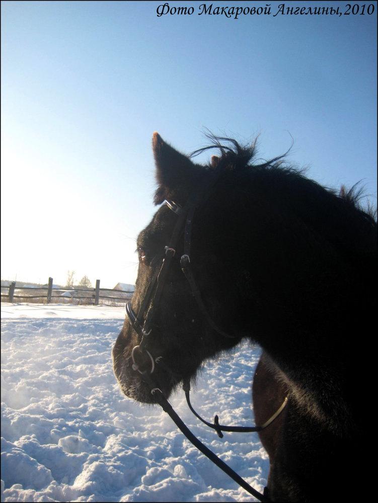 Моя солнечная лошадка