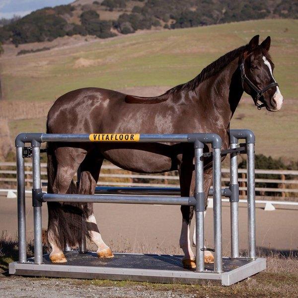 Лошадь на вибро-платформе