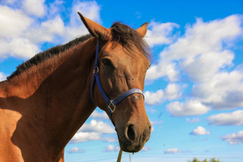Конь Сырник