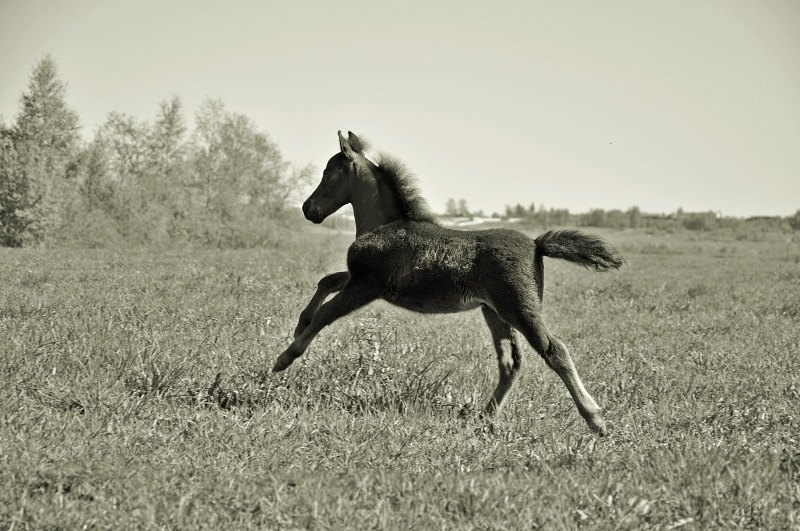 Сын Чемпионов породы, больше информации на сайте mini-pony.ru!