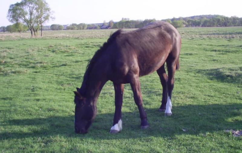 ...коник гулял на поле:)
