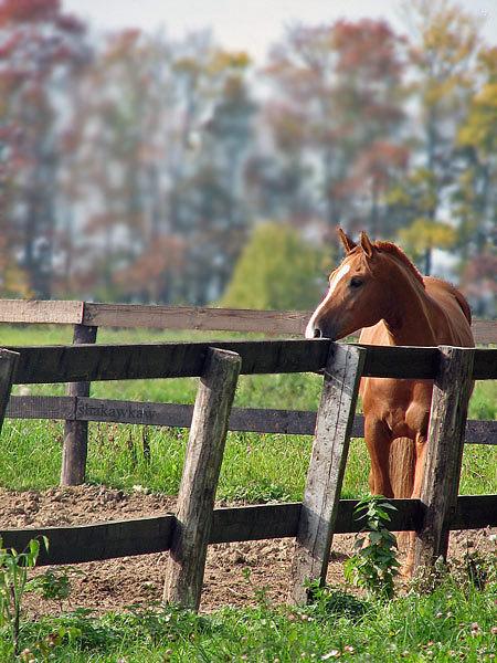 Глазго, частный конь. Кск Комплект