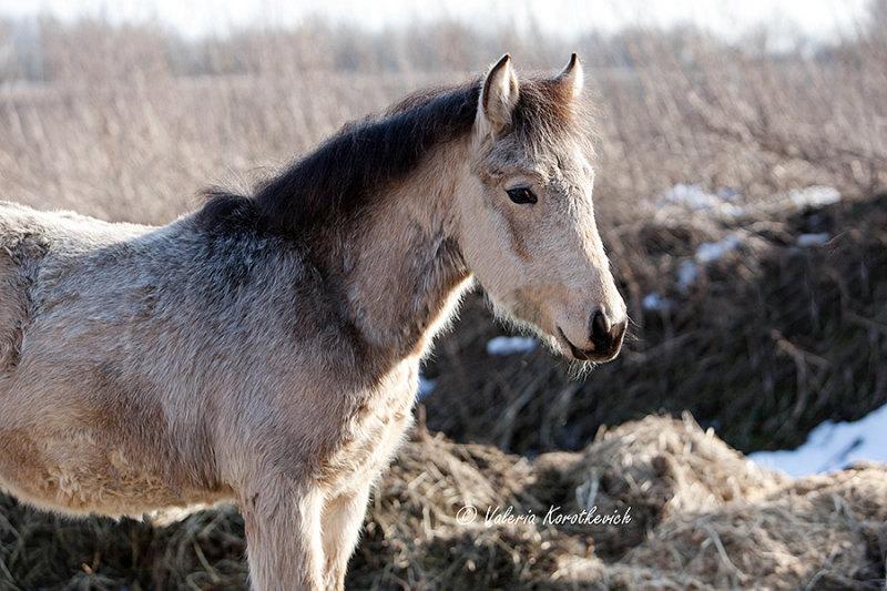 еще один постик про нашего коня http://kappeli.livejournal.com/14605.html