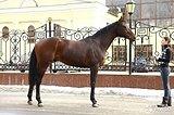 Идеальная учебная лошадь или производителем