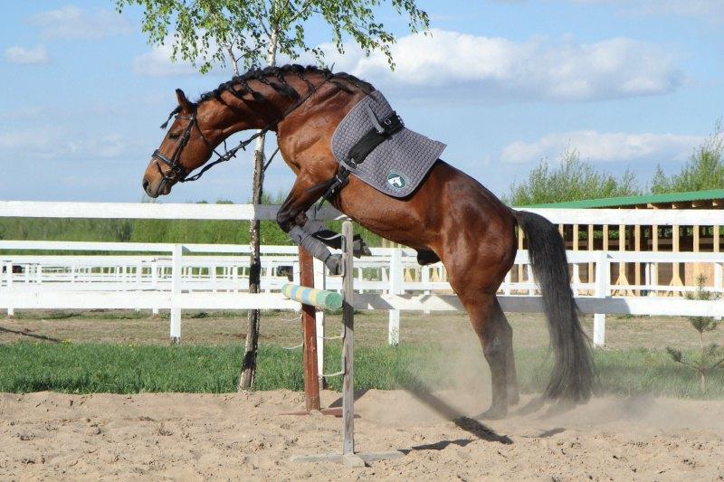 Даже в меру упитанные тела могут прыгать:)