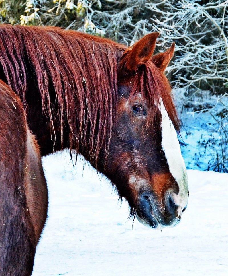 Конь,ставший частью моей жизни.Частью,которую безжалостно вырвали...Валик (Волхова - Лимонад)