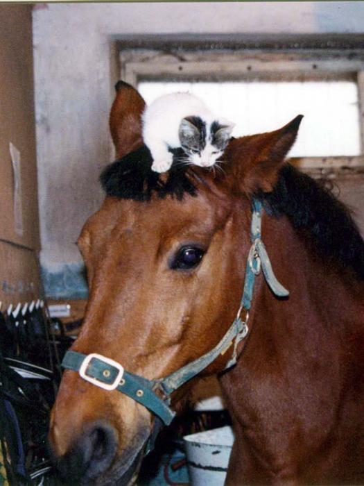 Нежная дружба Лувра с котенком