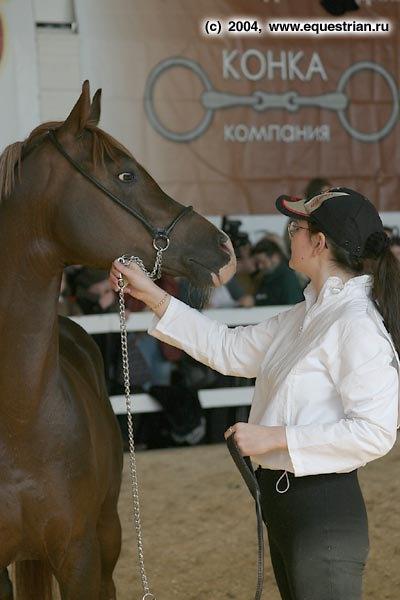 Шоу-чемпионат лошадей арабской породы. Набруз