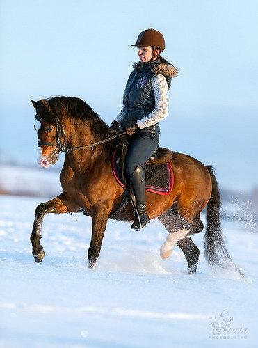 Росшный уэльский пони,жеребец секции Б.Премиум класс. ПРОДАЕТСЯ!  Подробнее на сайте http://mini-pony.ru/