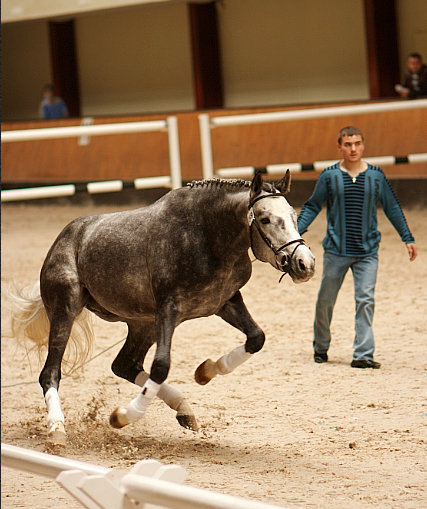 идём на взлёт :) соревнования на свободе для молодых лошадей