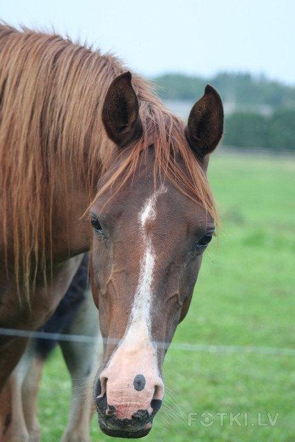 Лошадь зовут Сосa-cola:)))))фотография загружена на сайт с разрешением автора!