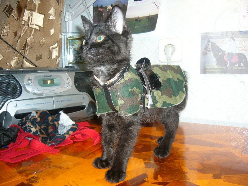 тьфу...кот)) Не совсем лошадь, но в лошадиной одёже;)))