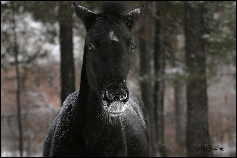 Малышка Л`Этуаль впервые увидела снег :)))))