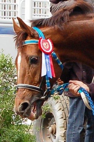 Рафид (Рэтив - Фибра-II) 2003г.р. На награждении. Победитель приза ВНИИК для буд.п. 4-х лет и старше, дист. 2000м