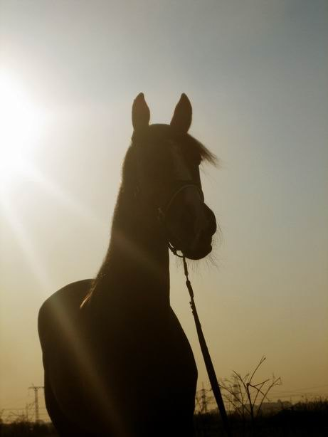 Лапушка в лучах вечернего солнца!