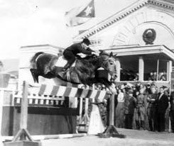 жеребец Талант, ахалтекинской породы. 1955 год.