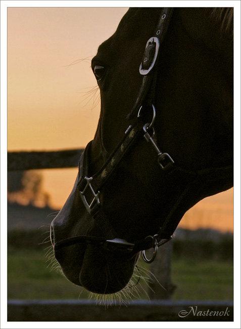 лошади очень умны, только не все люди знают об этом...