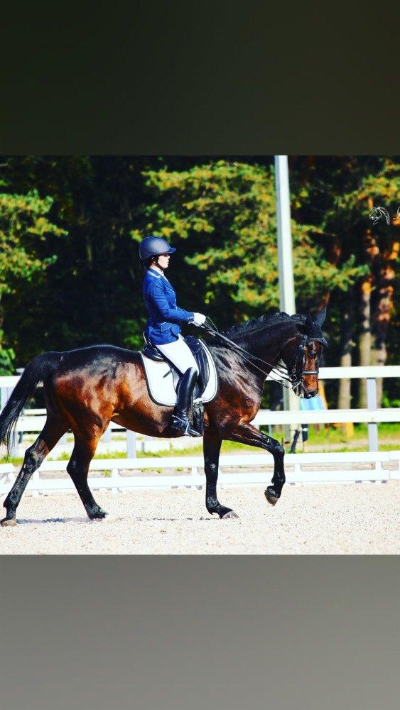 Предлагаем в Аренду , поларенды коня-учителя уровень МП