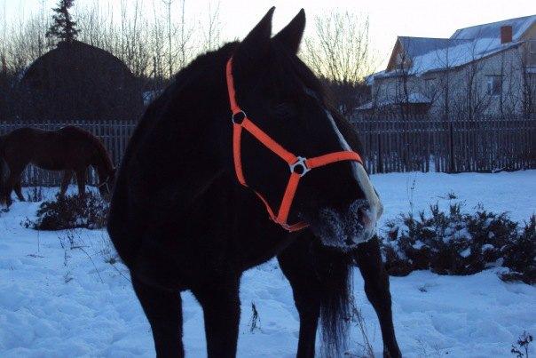 Рысская рысистая,2005года рождения,моя любимая лошадка))