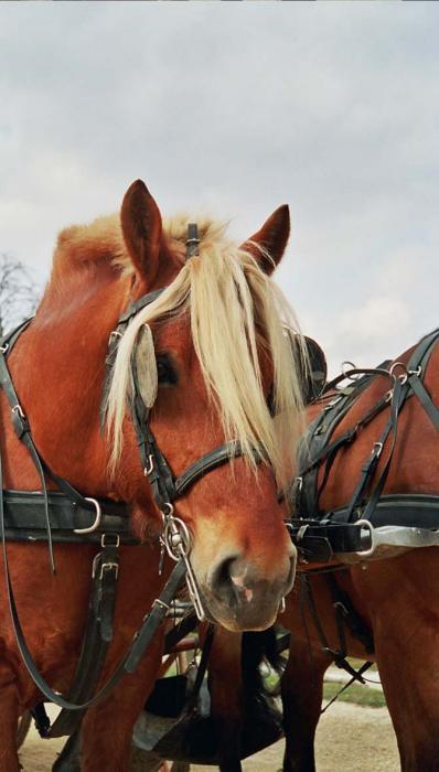 Еще покатушечная лошадь
