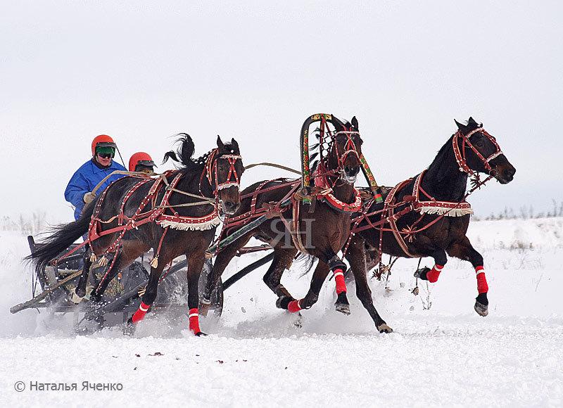 тройка Вологодского кон.завода