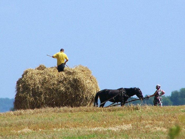 балорусская лошадка трудится