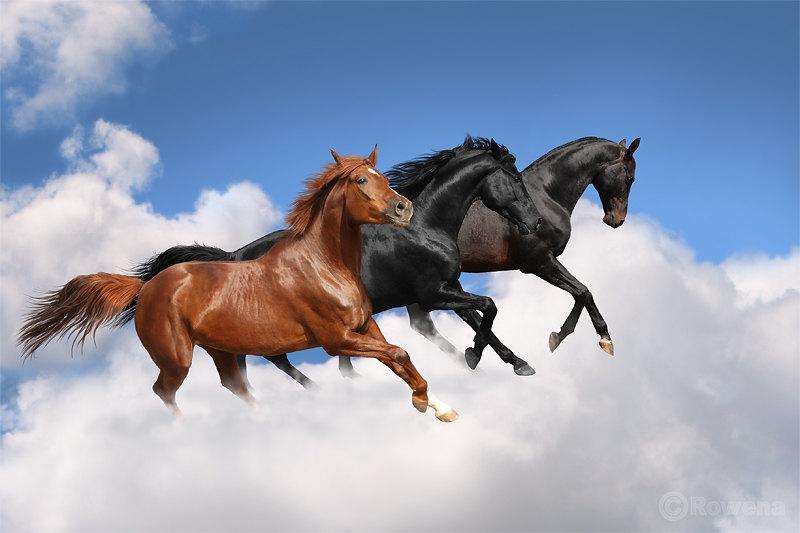тракен,голштин,ахалтек)))трио с одной конюшни