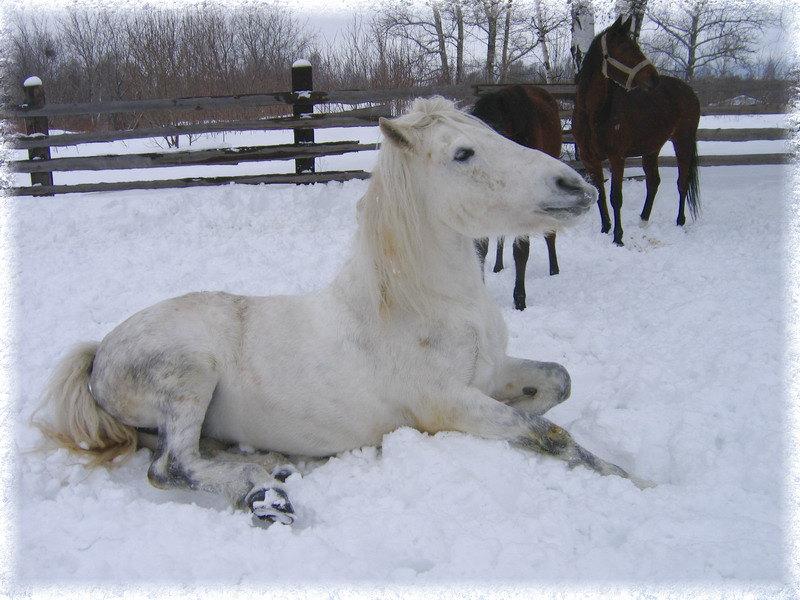 Марго на снежку заболдела :)