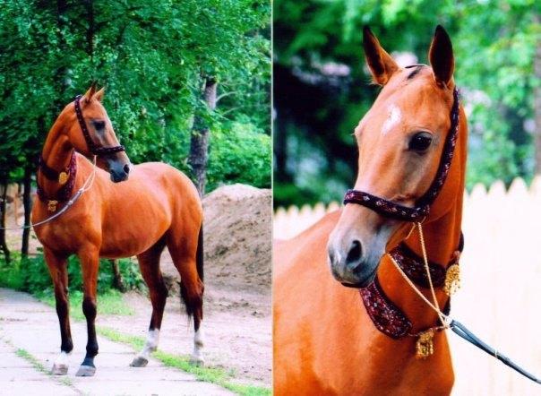 Автор: Белонина София.(лошадь продается)