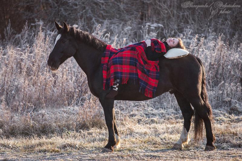 Маша и Кубик (кубическая лошадь, тяжеловозных помесей))