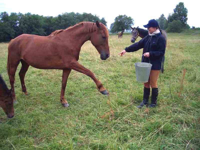 Учить  лошадей шакалить - в общем, не дело... Но уж больно прикольно