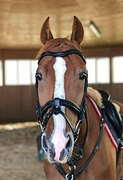 Конь-учитель в конкур