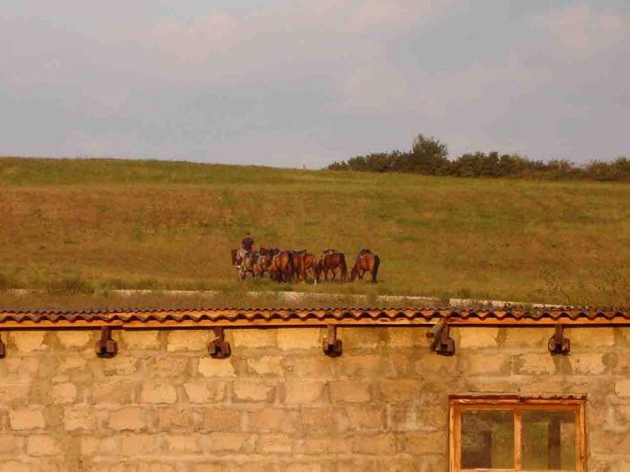 Отработали, откатали - отдыхать. Когда шли по маршруту мимо пронесся небольшой табун. Наши лошадки тоже решили не отставать. Немного повеселились.