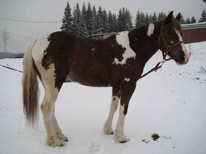 наш новый конь