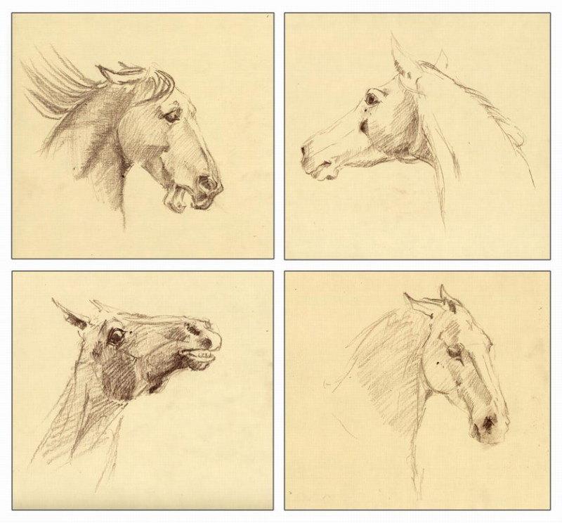 зарисовки разных эмоций лошадей