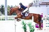 Ганноверская кобыла, конкур,2006