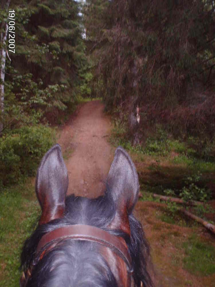 вид леса на лошади