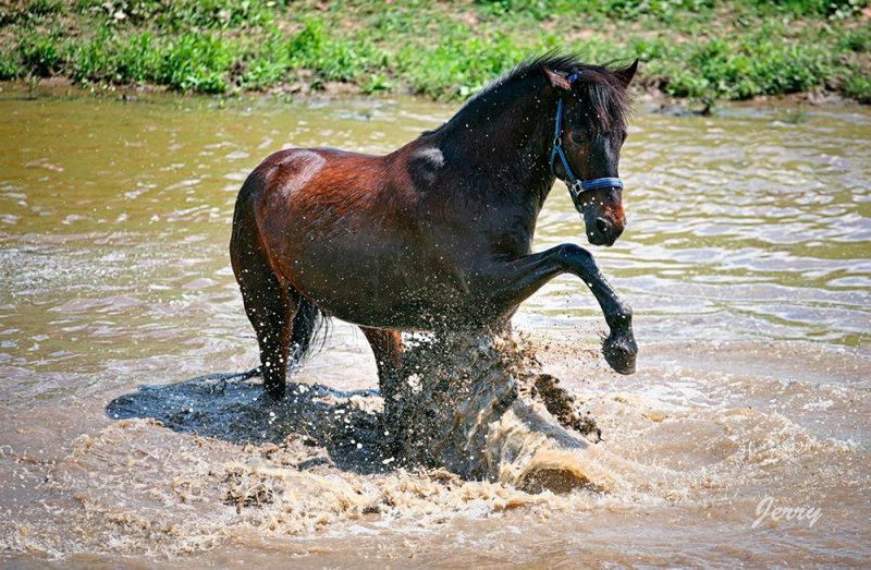 http://horse-way.ru/