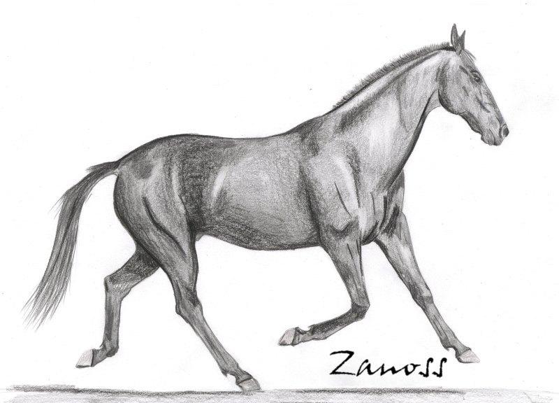 наконец нарисовала коня в полный рост!)