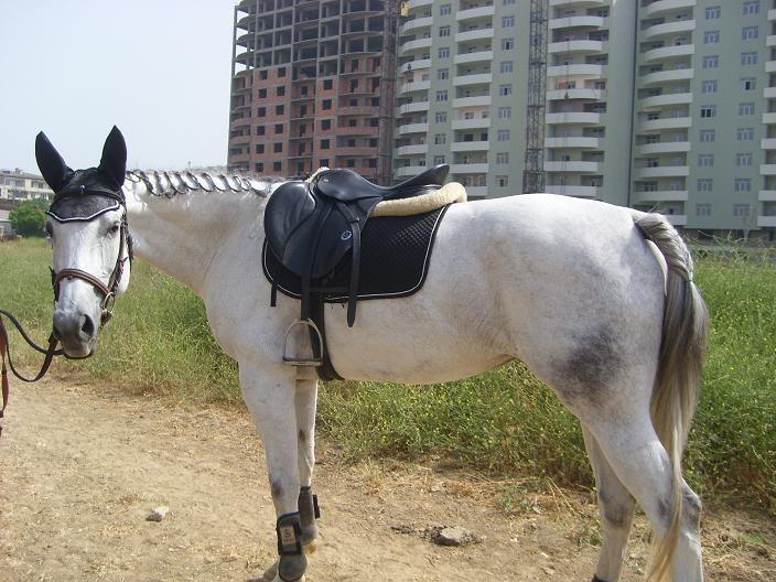 Лошадь из часной конюшни