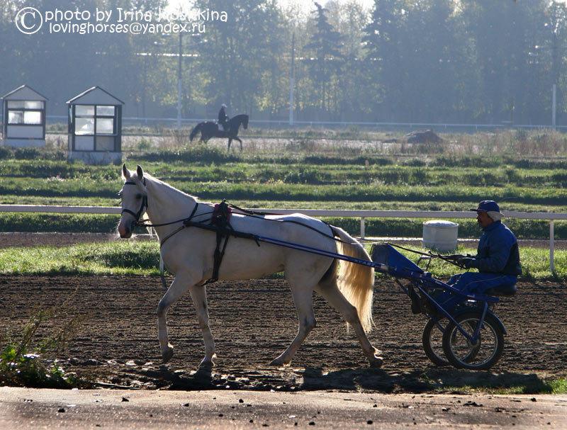 Московский ипподром. Тренировка лошадей