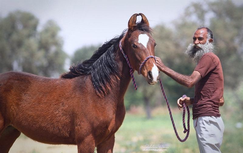 коб. Davi, ЧВ, India, 15.03.2015